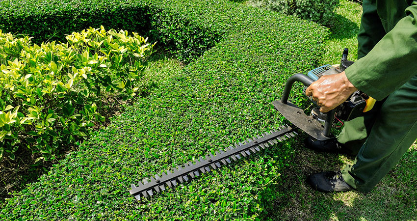 Pruning trees and shaping hedges