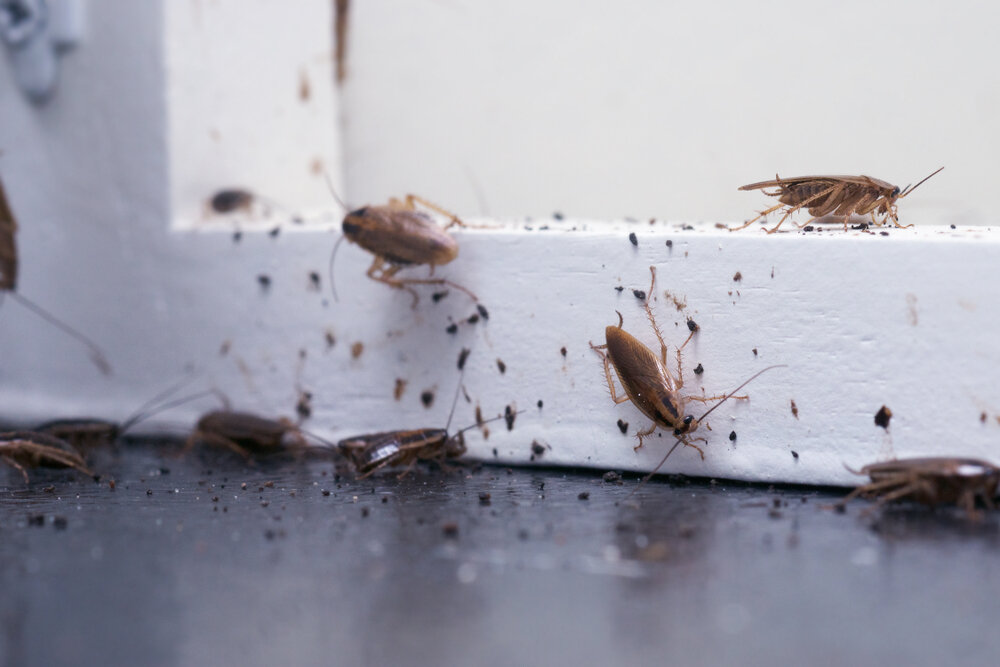 Signs of pests