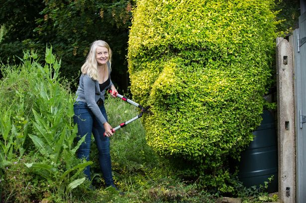 The Art of Hedge Trimming