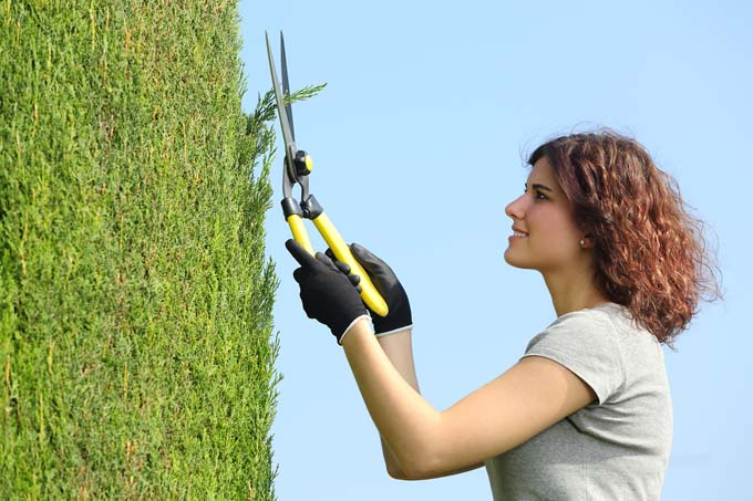 Gardener woman pruning a cypress with pruning shears with the sky in the background