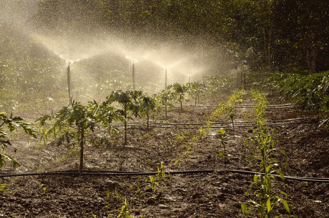 Water spraying in field